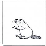 Dyr - Beaver