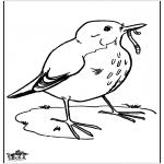 Dyr - Blackbird