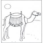 Dyr - Camel in the sunshine