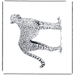 Dyr - Cheetah 2