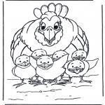 Dyr - Chicken and little chicks