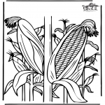 Litt av hvert - Corn