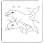 Dophins 1
