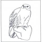 Dyr - Falcon