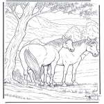 Dyr - Free coloring pages horse