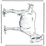 Dyr - Goat