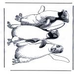 Tegneseriefigurer - Happy Feet 1