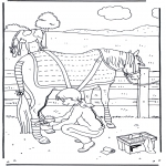 Dyr - Horse care