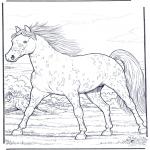 Dyr - Horse gallop at full