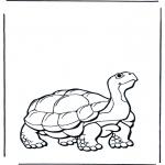 Dyr - Land turtle