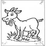 Småbarn - Little goat
