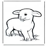 Dyr - Little lamb 1
