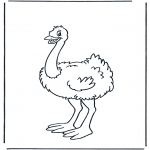 Småbarn - Little ostrich