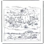 Dyr - Marmot