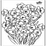 Litt av hvert - Narcissus