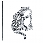Dyr - Panther