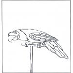 Dyr - Parrot 3