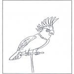 Dyr - Parrot 4