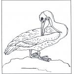 Dyr - Pelican