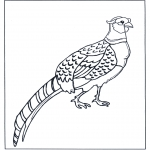 Dyr - Pheasant