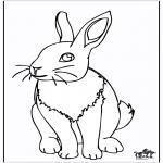 Dyr - Rabbit 4