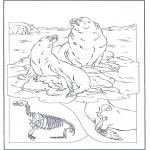 Dyr - Sea lions