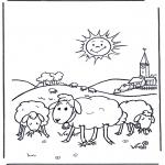 Dyr - Sheep in the sunshine