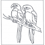 Dyr - Two parrots